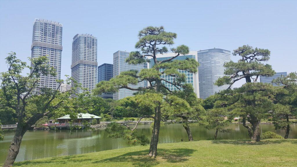 Giardini Hamarikyu vicino ai grattacieli di Shiodome a Tokyo