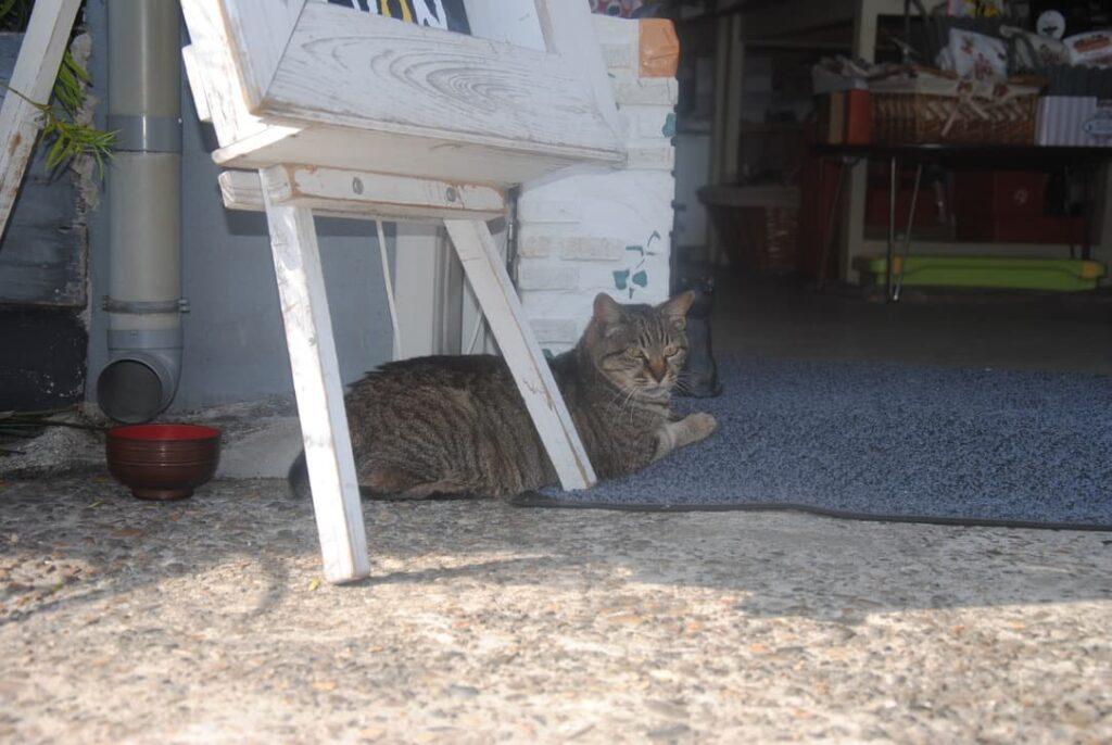 Gatto seduto a Yanaka (Tokyo)